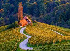 Man Made Vineyard  Man Made House Slovenia Mountain Tree Forest Fall Wallpaper