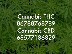 Lloyd Mear Cannabis numbers