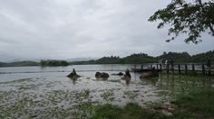 Primer día en el Centro de Conservación Nacional de Elefantes de Sayaboury (Laos) - Conmimochilacuestas