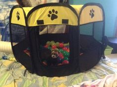 Eloras ball pit Pet Ferret, Under Armour, Backpacks, Pets, Fun, Women's Backpack, Backpack, Funny, Hilarious