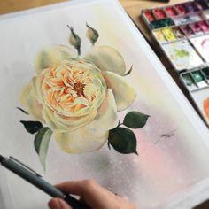 #watercolor #watercolour #watercolorpainting #watercolorart #watercolor_gallery #watercolorillustration #watercolorblog #art #artist #artwork #artsy #art_empire #aquarelle #rose #topcreator #illustrator #magic