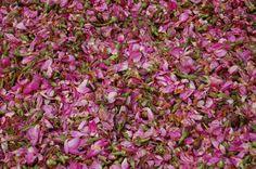 Rosas secad en la medina de Fez