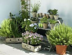 Potted plants and crates