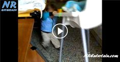 Vídeo para Rir da Luta Entre 1 Bebé Teimoso e 1 Cadeira Malandra - Quem Ganhará.