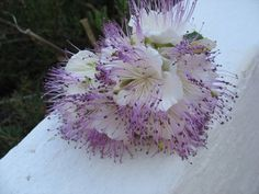 Bouquet fiori di cappero