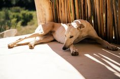 Miss Moss // River View, dog Miss Moss, I Love Dogs, South Africa, Giraffe, Nostalgia, Horses, River, Photography, Animals