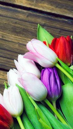 Kolorowe tulipany - Tapeta na telefon Vegetables, Flowers, Vegetable Recipes, Veggies