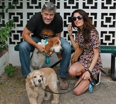 Amal and George Clooney's new basset hound.