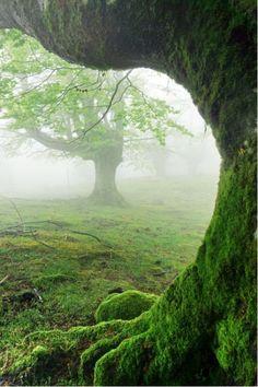 Wonderful Trees | www.wallartprints.com.au #TreePictures #NaturePhotography