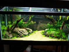 freshwater aquariums | ... Aquarium : White Sand Water Plants Coral Reef Beautiful Aquarium