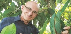Semejanzas y diferencias entre las plantas de marihuana y las de...