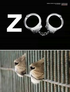 zoo's should only be used as rehab/hospitals - not full of animals that have been abused by trapping, abused during shipping, and even if the zoo doesn't physically abuse them locked in a cell is mental abuse for anyone. Orcas, Cane Corso, Peta, Sphynx, Chinchilla, Wild Life, Otter, Rottweiler, Pitbull