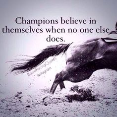Tonnes of Love quotes, Life quotes and Funny Quotes Rodeo Quotes, Equestrian Quotes, Equestrian Problems, Equine Quotes, Hunting Quotes, Barrel Racing Quotes, Barrel Racing Horses, Barrel Horse, Inspirational Horse Quotes