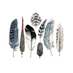 Birds of many feathers flocked together, and illustrator Natasha Lawyer captured their striking plumage for our Watercolor Feather Set. Stand out from the flock with this eclectic assortment including Watercolor Tattoo Feather, Feather Drawing, Feather Painting, Feather Tattoos, Watercolor Paintings, Watercolors, Feather Sketch, Flower Watercolor, Abstract Watercolor