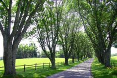Charming Country Home Driveways, Natural Driveway Landscaping Ideas