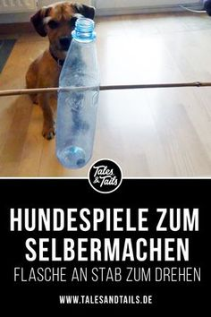 Do it yourself games-Spiele zum Selbermachen For this game you need an empty plastic bottle and treats. Great for rainy afternoons to keep your dog entertained. Dolly Parton, Pet Dogs, Dog Cat, Empty Plastic Bottles, Gato Gif, Pumba, Dog Games, Dog Costumes, Dog Training Tips