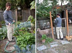 A Backyard Farm Evolves in Seattle #urbanfarming #backyardgoats