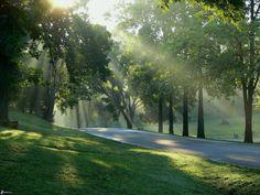Фотообои природа от 250 р.м., золотые луга, зеленые деревья, цветы,восход солнца, великолепие природы,печать в Екатеринбурге, березы