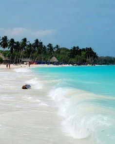 Playa Blanca, Cartagena, Colombia - Pin for my brother, Kimball, when he misses Cartegena! Places To Travel, Places To See, Travel Destinations, Tahiti, Dream Vacations, Vacation Spots, Colombia Travel, South America Travel, Future Travel