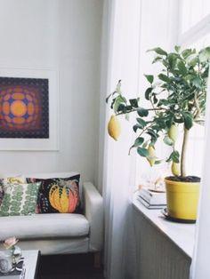 urban jungle bloggers / urbanjunglebloggers / vegetable / fleurs / plantes / végétation / verdure / interior