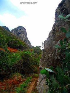 Parque Rural de Anaga, Tenerife http://ruthrodrigueztf.wordpress.com #Anaga…