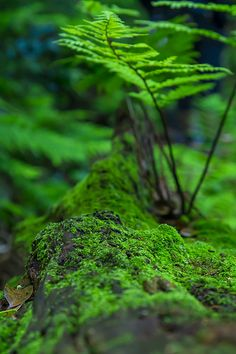Fern and moss - I love both, there is something so eternally beautiful and simple about these plants.