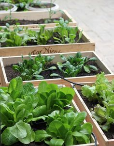 Considering the way we eat , it makes sense that we would enjoy growing our own food, but I didn't know just how much until now. My whole fa...