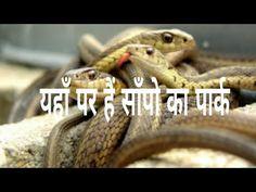 vanvihar snake park - YouTube Snake, Park, Youtube, A Snake, Parks, Youtubers, Snakes, Youtube Movies