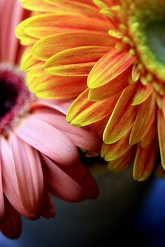 #flora #flower #color