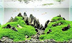 On distingue deux définitions de l'aquascape, il y a donc deux ...