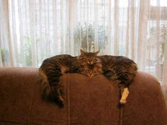 Funny pictures about When cats assemble to create a monster. Oh, and cool pics about When cats assemble to create a monster. Also, When cats assemble to create a monster. Cute Cats, Funny Cats, Funny Animals, Cute Animals, Wild Animals, Crazy Cat Lady, Crazy Cats, Funny Optical Illusions, Animal Pictures