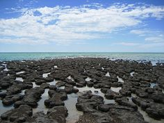 Shark bay, Australia - With the largest and richest area of seagrass meadows in the world, this site is a critical habitat for endangered dugongs, hosting about 12% of the world's population. Hamelin Pool contains the world's most diverse and abundant colony of living stromatolites, providing some of the earliest records of life on earth.
