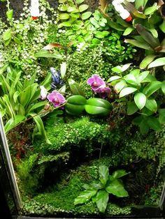 Selecting Grow Lights for Indoor Living Wall Applications Gecko Terrarium, Aquarium Terrarium, Reptile Terrarium, Moss Terrarium, Terrarium Plants, Gecko Vivarium, Water Terrarium, Moss Garden, Water Garden