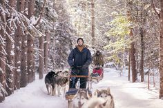 Heureux avec les chiens dans le Parc des Appalaches. Canada, Husky, Snow, Dogs, Animals, Outdoor, Nature, Snow Activities, Cross Country Skiing