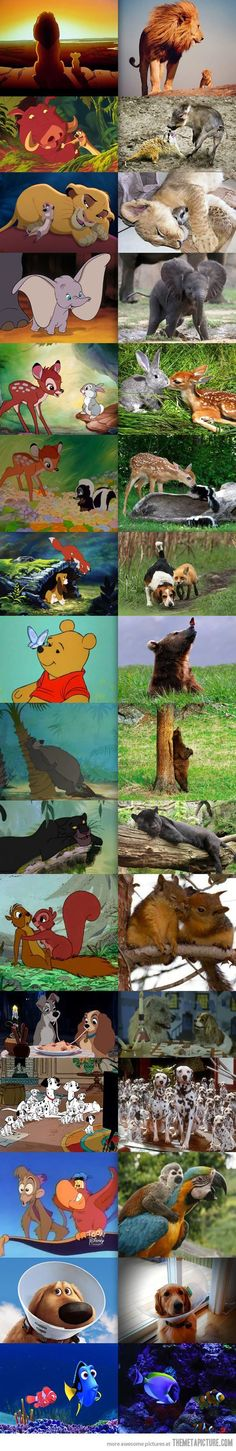 Disney animals in real life... I'm pretty   sure half of them are photo shopped... But AW. haha