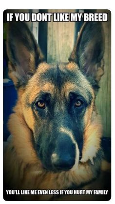 Wicked Training Your German Shepherd Dog Ideas. Mind Blowing Training Your German Shepherd Dog Ideas. Animals And Pets, Funny Animals, Cute Animals, Beautiful Dogs, Animals Beautiful, I Love Dogs, Cute Dogs, White Shepherd, German Shepherd Puppies