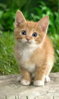Gattino tenero