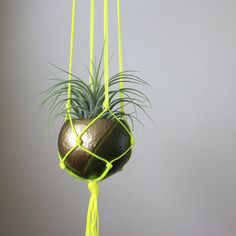 Neon Macrame Plant Hanger with Tillandsia Air Plant in Pod Planter - Olive Green, Bronze Gold, Neon Yellow.  Home Decor