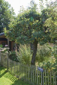 Succulents Garden, Garden Plants, House Plants, Backyard Patio Designs, Woodland Garden, Fairy Doors, Homestead Survival, Garden Trees, Go Green