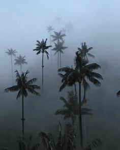 Fog engulfed palm trees in Valle De Cocora, Colombia. 🌴 Footage by Explore. Cute Instagram Pictures, Cool Pictures, Instagram Posts, Rain And Thunder, Dark Skies, Fantasy Landscape, Nature Images, Phone Backgrounds, Palm Trees