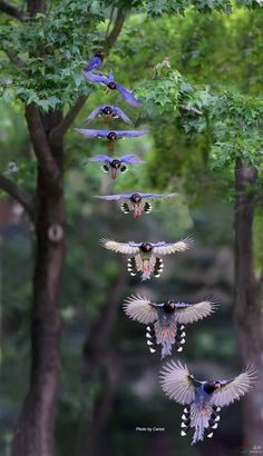 Flying Jewels, God`s Awesome & Gorgeous Creation.