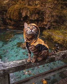 Suki in seinem Regenmantel – – les chat - Animal photography Cute Baby Animals, Animals And Pets, Funny Animals, Nature Animals, Wild Animals, Beautiful Cats, Animals Beautiful, Cute Cats, Funny Cats