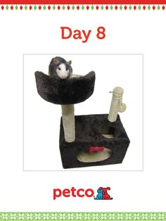 Here is today's 12 Days of Pinterest featured image (12/10/2012). Pin this Cozy Rat Hideaway image to one of your boards for a chance to win a 500 dollar Petco shopping spree, plus 500 dollar Petco Gift Card for a Petco Foundation Shelter/Rescue of your choice. Winner will be announced tomorrow (12/11/2012) between 12pm and 5pm Pacific Time.