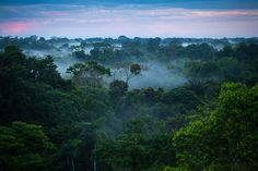Tell Cargill to end its role in tropical deforestation Amazon Rainforest Trees, Brazil Amazon Rainforest, Rainforest Project, Wild Life, Ecuador, Plant Species, Insect Species, Anaconda, South America Travel