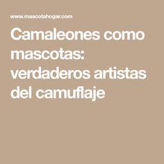 Camaleones como mascotas: verdaderos artistas del camuflaje
