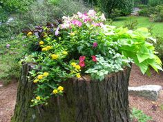You Can Teach An Old Stump A New Trick! - Garden Designs - Decorating Ideas - HGTV Rate My Space