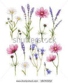 Lavender Fotografie, Lavender Archivní fotografie., Lavender Snímky : Shutterstock.com