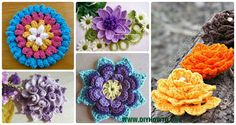 A Collection of crochet Flower motifs, lotus, water lily, spiral flowers, new crochet ideas