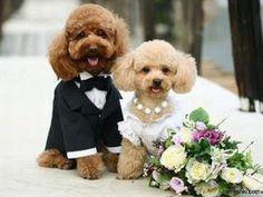Pas getrouwde hondjes