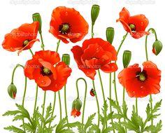 Spring flowers: poppy — Stock Vector © d-e-n-i-s #4211612